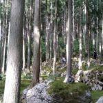 苔に囲まれてリフレッシュ。ここにしかない世界観、カフェ「苔筵(こけむしろ)」
